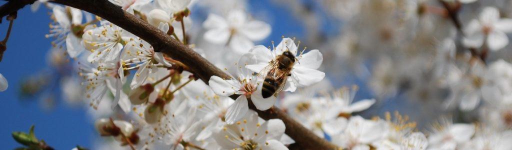 Darba bites mūžs