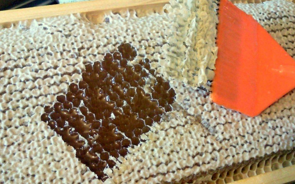 Medus kāres vākošana - Lūšu Drava
